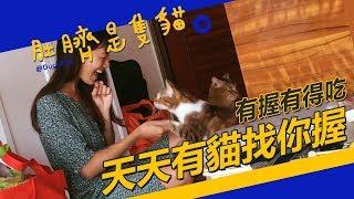 ◖肚臍是隻貓◗ 有握有的吃 貓奴怎麼這麼開心?♭