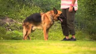 里親さん募集中の保護犬バルドと誰もいないドッグランで遊んできました...