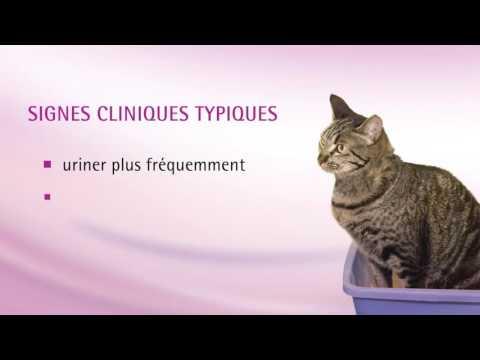 Insuffisance Rénale Chez Le Chat