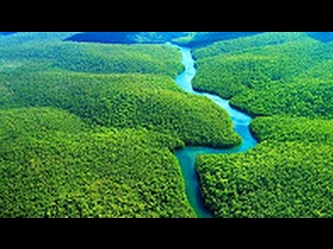 National Geographic   Amazon Forest   BBC Wildlife Animal Documentary