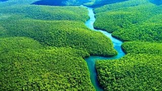 National geographic   Amazon Forest   BBC wildlife animal documentary