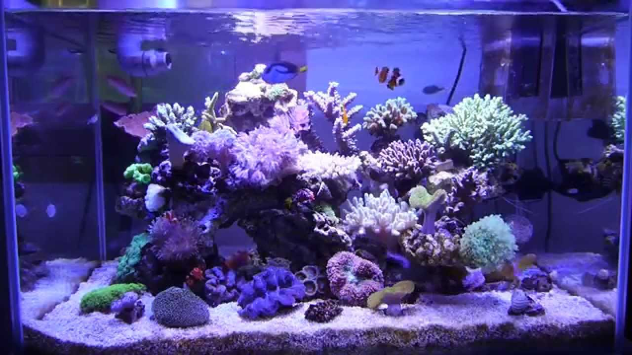 marine aquarium reef tank 55gallon 200l youtube. Black Bedroom Furniture Sets. Home Design Ideas
