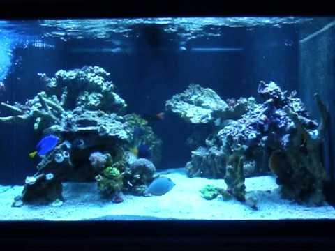 200g Marineland Deep Dimension Reef Tank - YouTube
