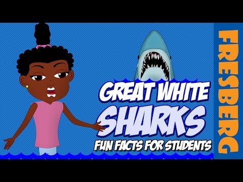 """Shark Week is amazing & we have, """"Fun Facts for Students: Great White Sharks"""" 