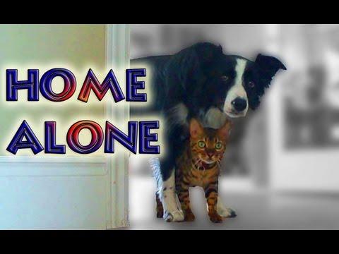 Home Alone with Nana & Kaiser