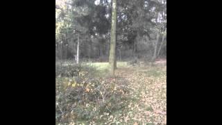 Field Spaniel Club Wandeling 6/11/2011 Zeddam