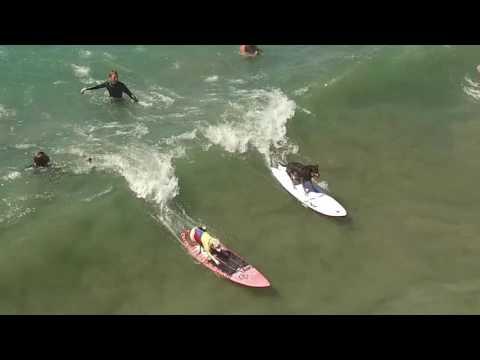 Surf City Surf Dog Huntington Beach