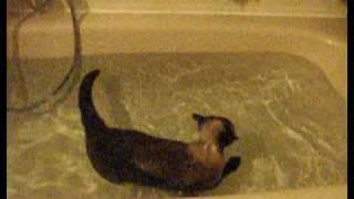Katze schwimmt freiwillig in der Badewanne