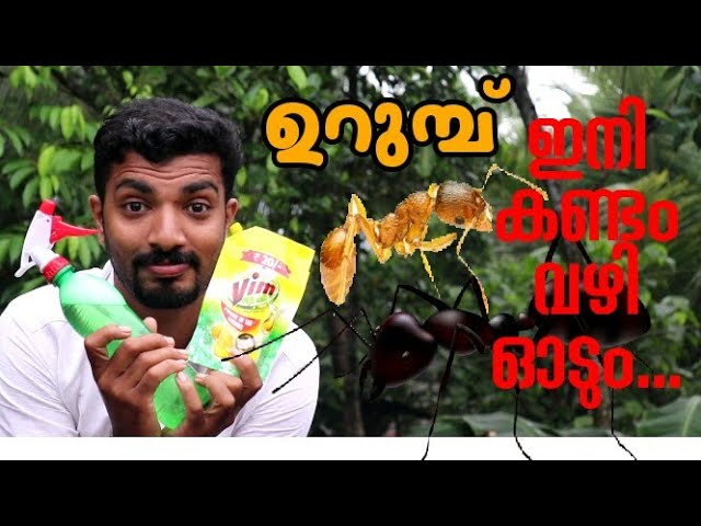 spray this simple mixture and you will never see ants in your home again|ഉറുമ്പ് ഇനി കണ്ടം വഴി ഓടും|