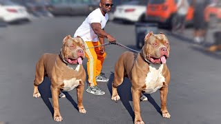 These Are Top 10 Manly Dog Breeds