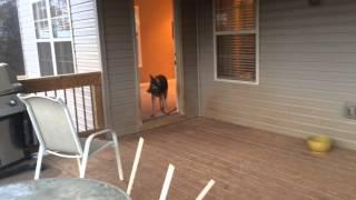 Eliminating Running Out Of Doors Before We Start Training - The Calm K9 Dog Training