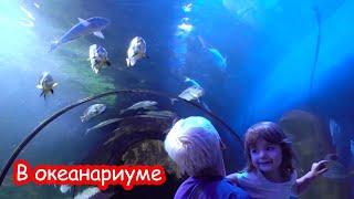 VLOG Океанариум в Киеве. Скат просится на ручки