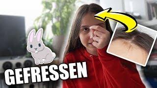 Kaninchen hat meine Haare GEFRESSEN 😂 - Celina
