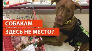 Собаки в магазине/ опрос