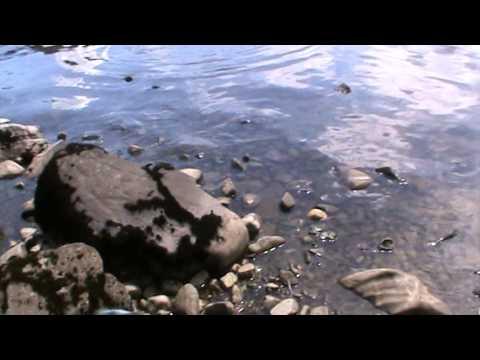 Loch Earn Trout Fishing