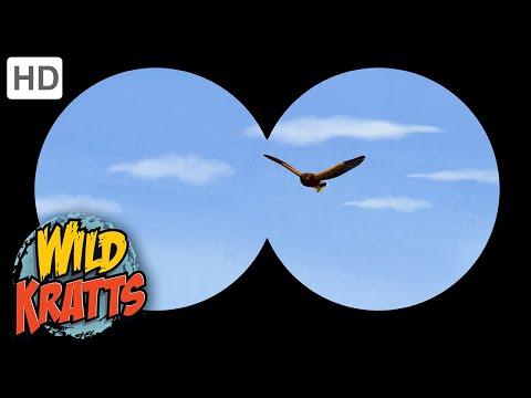 Wild Kratts | Wolf Hawks |Birds |Nature