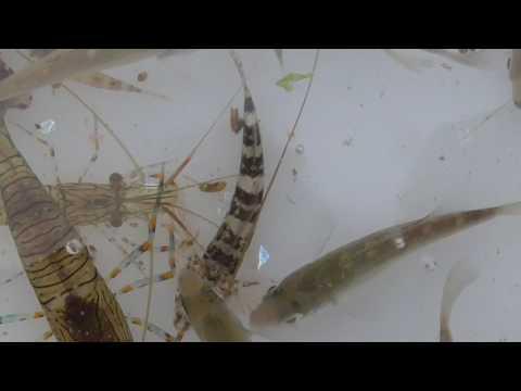 潮たまり(タイドプール)ですくった小魚、小エビ