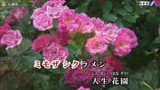 10月18日に発売された五月みどりさんの新曲を唄ってみました。カラオケ...