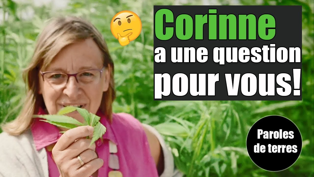 Mais que cultive Corinne et pourquoi faire ? Paroles de Terres - Saison 3