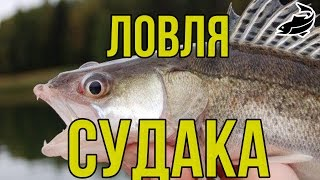 Ловля судака. Ловля судака на течении на живца. Catching walleye on the course on live bait. HD 2016