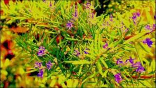 Klute - Rosemary