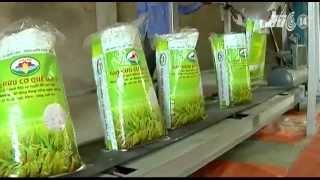 Sử dụng gạo thế nào là an toàn cho gia đình?