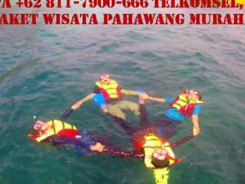 paket-wisata-pulau-pahawang-dari-palembang,-wa-+62-811-7900-666-telkomsel