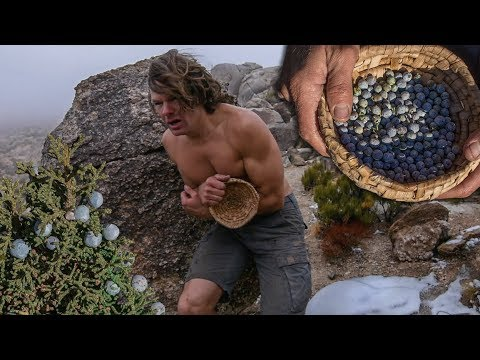 Harvesting Juniper Berries in Freezing Cold Desert