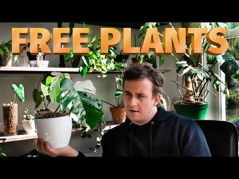 TRADING PLANTS: THE ULTIMATE GUIDE // How To Trade Houseplants