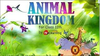 Repeat youtube video ANIMAL KINGDOM: ANIMAL KINGDOM INTRODUCTION - 01/72