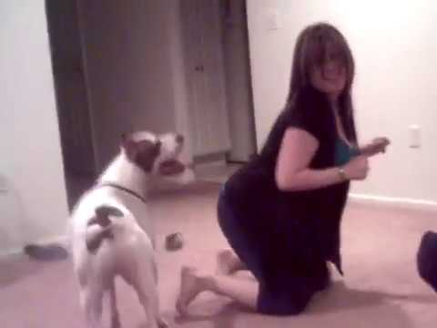 Girl playing with pitbull dog