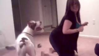 Girl playing with a pitbull dog