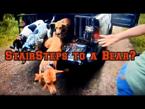 BEAR Hunting in Va…The Stairway to A Bear?