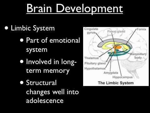 Adolescent Brain Development - Part 1