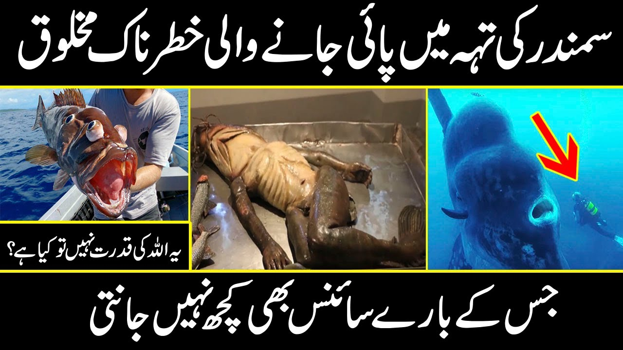 Terrifying Sea Creatures That Actually Exist | Most Unexplained Things Found in The Ocean|Urdu Cover