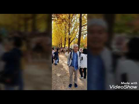 autumn-(musim-gugur)-di-nami-island-korea-selatan-bersama-keluarga-ustadz-hendra-kholid