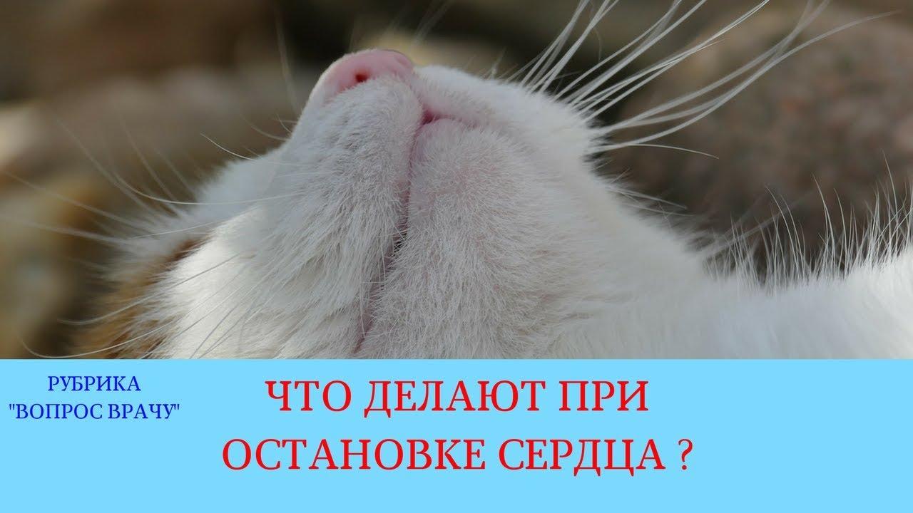 09.03.18 Реанимация животных
