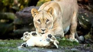 Как животные заботятся о своих  детёнышах
