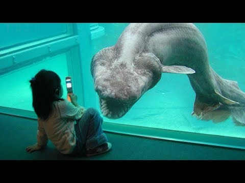 15 GIANT Animals You Didn't Know Existed!