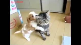 Смешные собаки выкармливают тигрят, дружат с котятами - чумовая подборка!!!