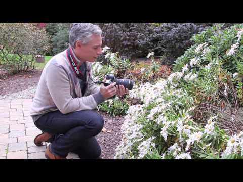 How to Photograph Insects: Bees, Butterflies, Wasps, and Flies Photography Tutorial