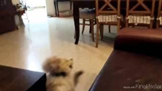 Собака-летака! С фэйлом в конце видео))(http://gavpost.ru/ - лучшие видео с собаками, фото щенков и новости о собаках!, 2014-04-27T16:21:35.000Z)
