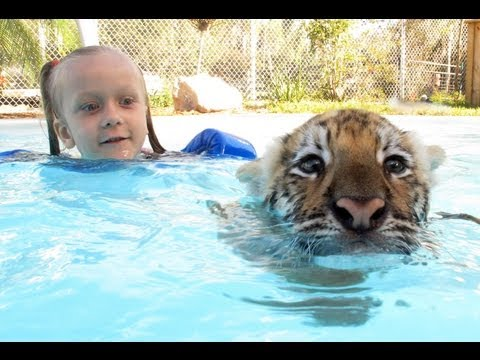 Thumbnail: Swimming With Tiger Cubs