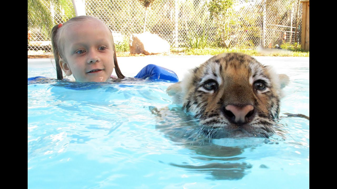 Swimming With Tiger Cubs - YouTube
