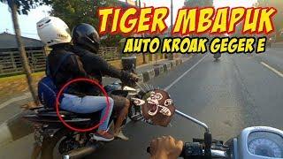 TIGER HORE !! TIGER HEREX | VLOG NGAPAK