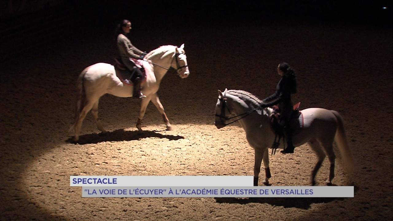 """Spectacle : """"la voie de l'écuyer"""" à Versailles"""