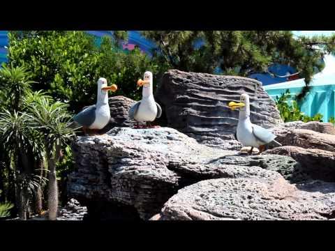Mine Mine Mine Birds Outside Nemo Ride At Epcot
