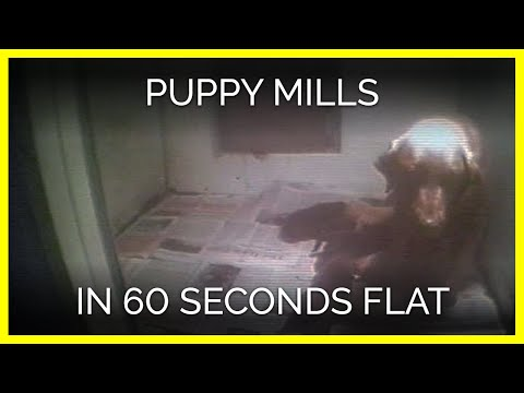 Puppy Mills in 60 Seconds Flat