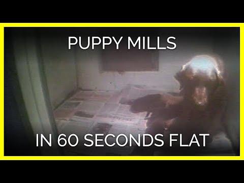 Puppy Mills in 60 Seconds Flat