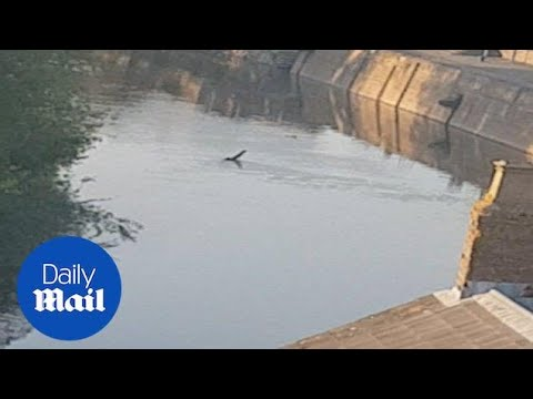 Loch Ness monster look-a-like spotted in Gloucester canal - Daily Mail